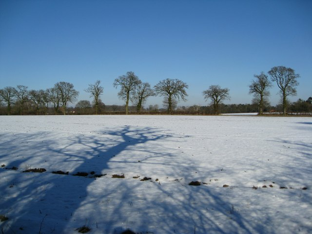 Shadows and snowy fields