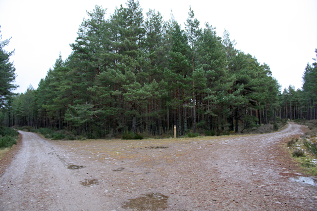 Junction 2, Culbin Forest