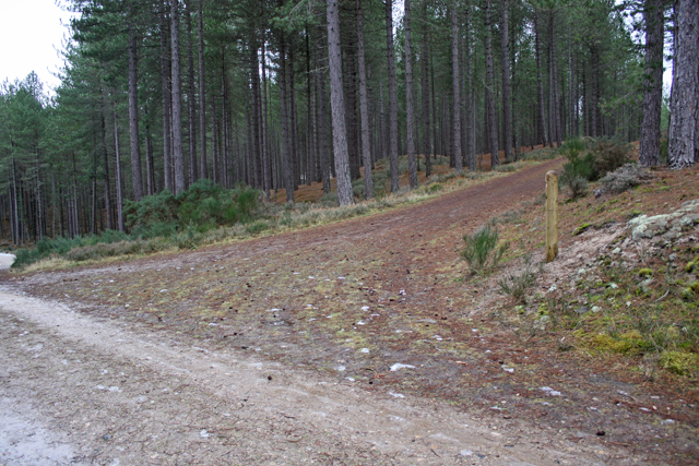 Junction 11, Culbin Forest
