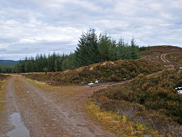Track junction in Griffin Forest