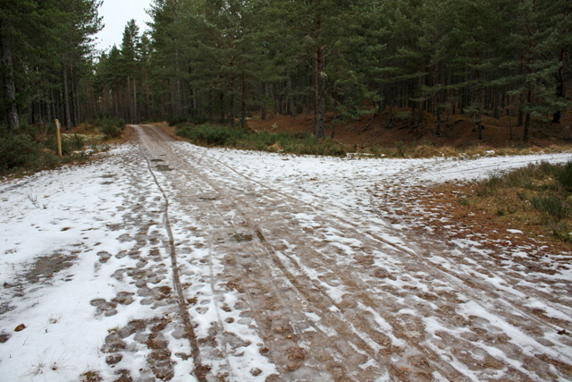 Junction 9, Culbin Forest