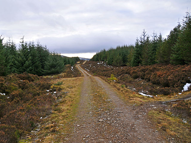 Forest track in Griffin Forest