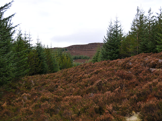 Firebreak in Griffin Forest
