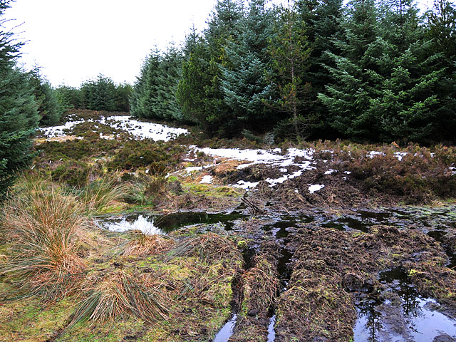 Firebreak and rough track in Griffin Forest