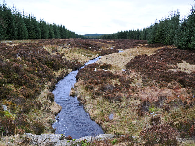 Tombane Burn in Griffin Forest