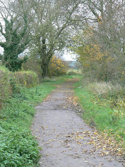 Trent Lane