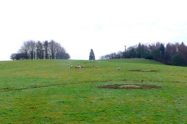 Countryside near Seavington St Michael