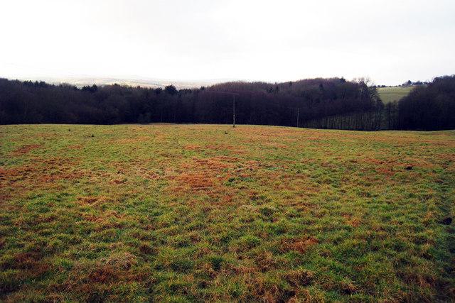 Field towards Great Park Wood