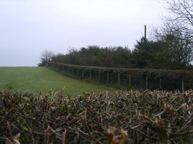 Hedge at Heaton