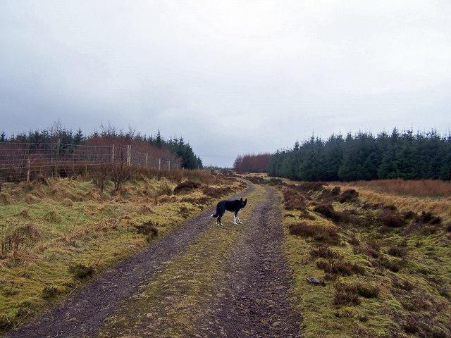 Track into Edinbane Forest