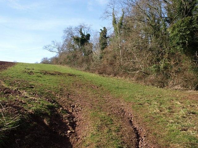 Field by Lower Charlwood Copse