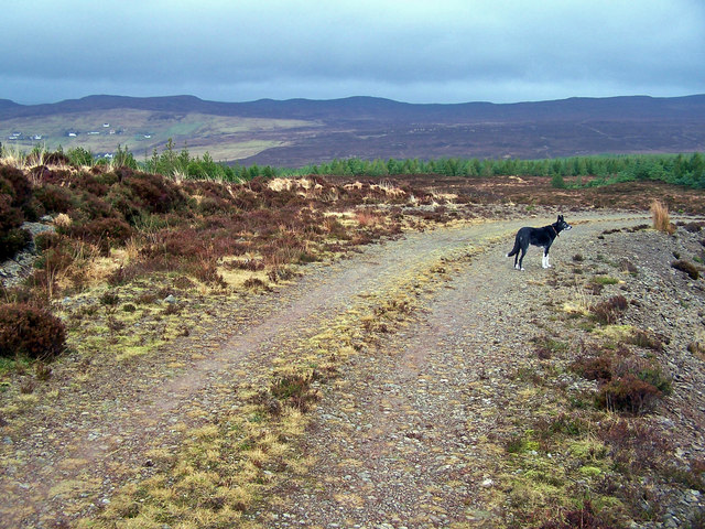 Track in Edinbane Forest