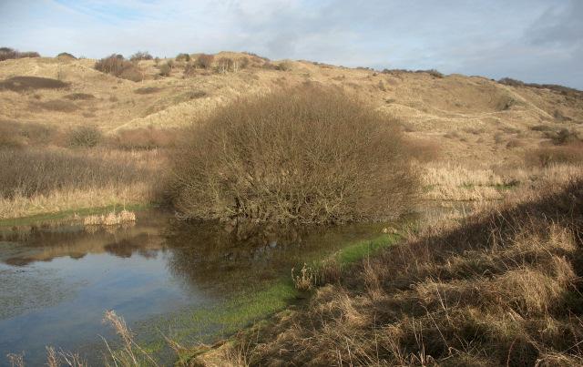 Small pool, Merthyr Mawr Warren