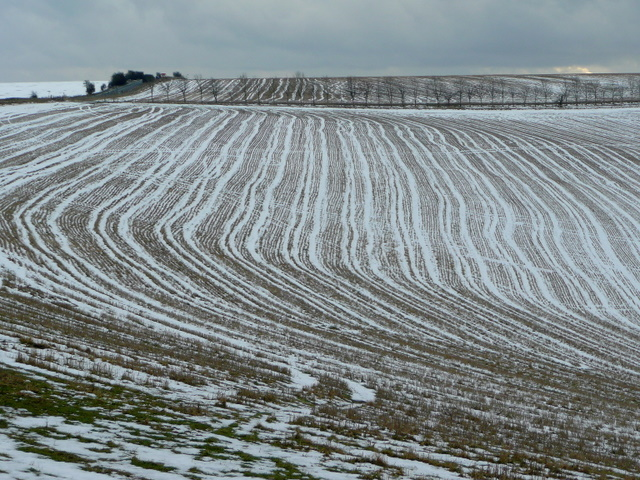 Arable land; Pertwood Down