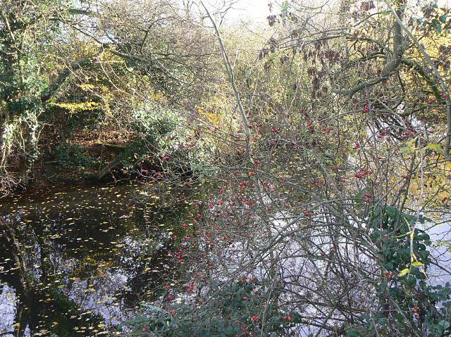 Marl pond