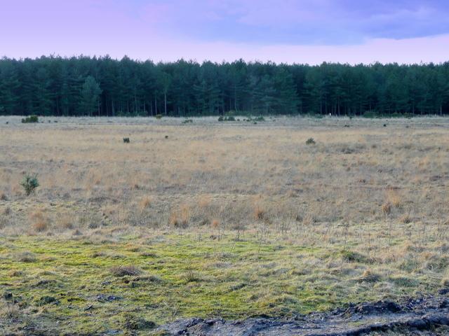 Battle Plain, Holme Heath
