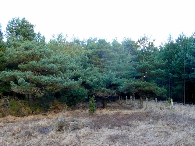 Edge of Holme Heath