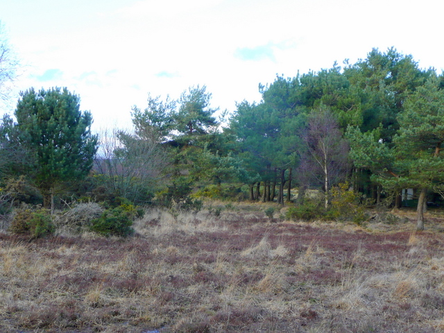 Edge of Holme Heath 2