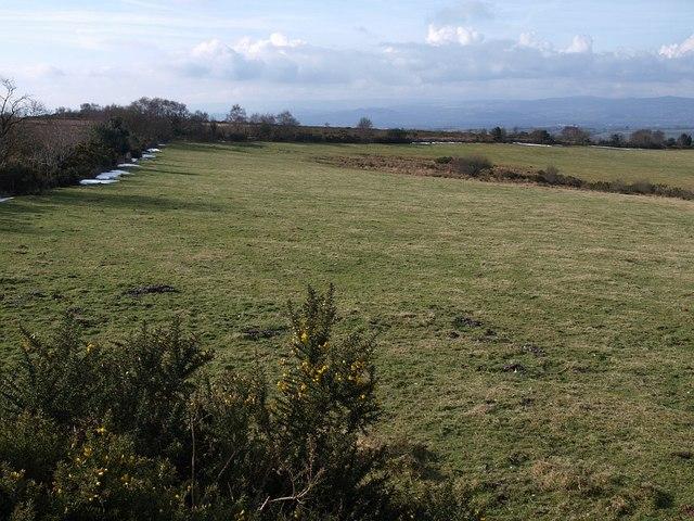 Field on Little Haldon