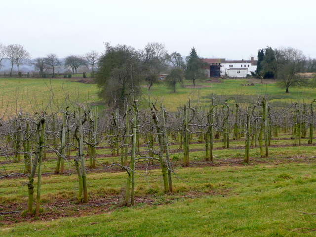 Orchards at Beavan's Hill 1