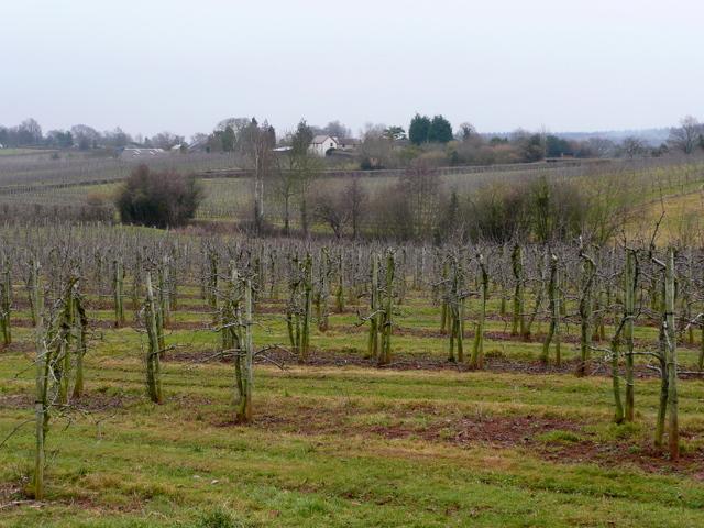 Orchards at Beavan's Hill 2