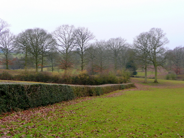Edge of Withymoor Wood