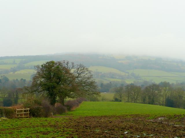 Countryside around Aston Ingham