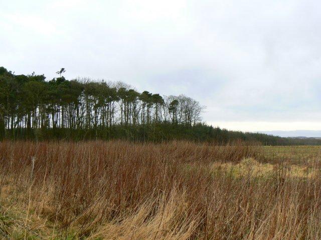 Reeds beside Kippo