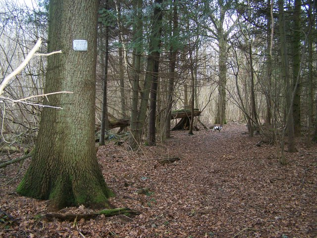 Path in Coombe Wood