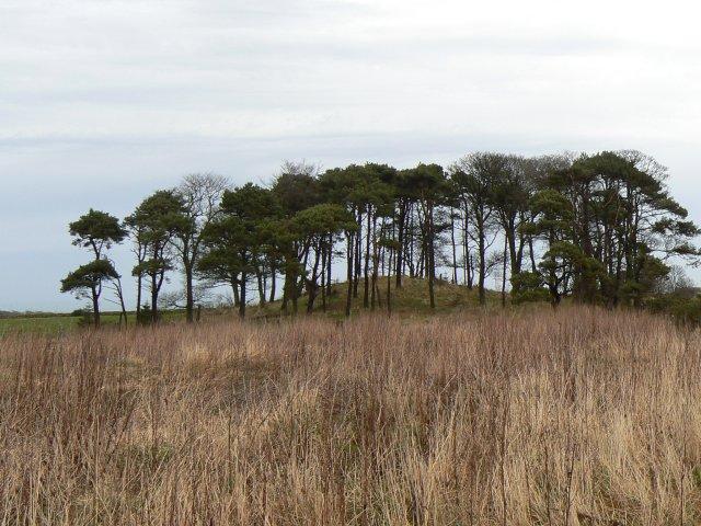 Laverock Hill