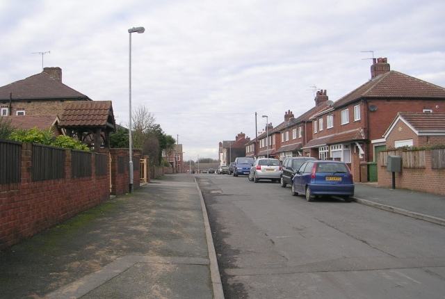 Lime Tree Avenue - Love Lane