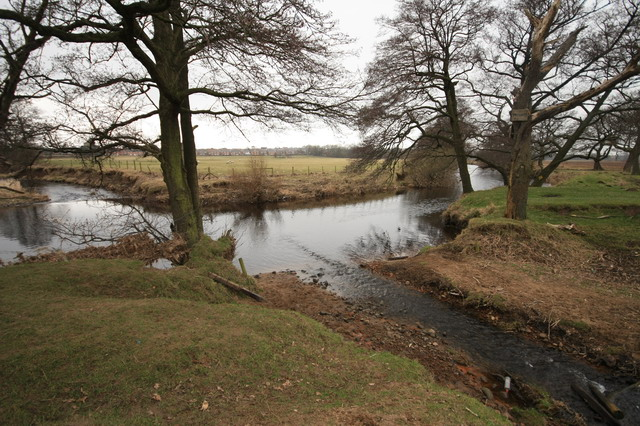 Grizedale Brook Meets River Wyre