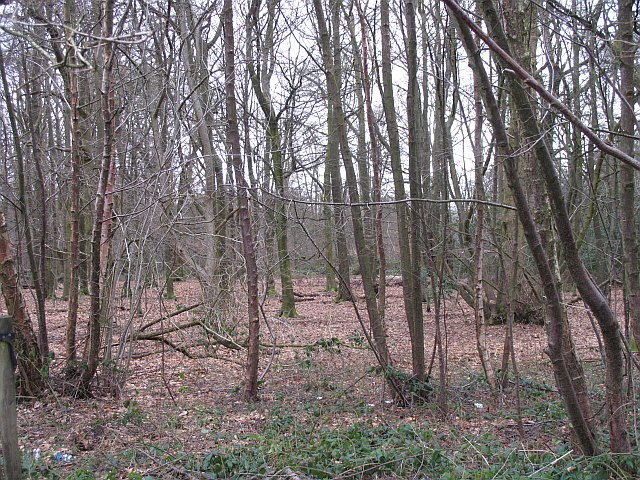 Woodland, Lickey Warren