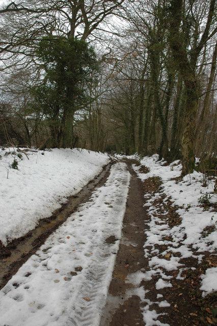 Bridleway through Firball Cover