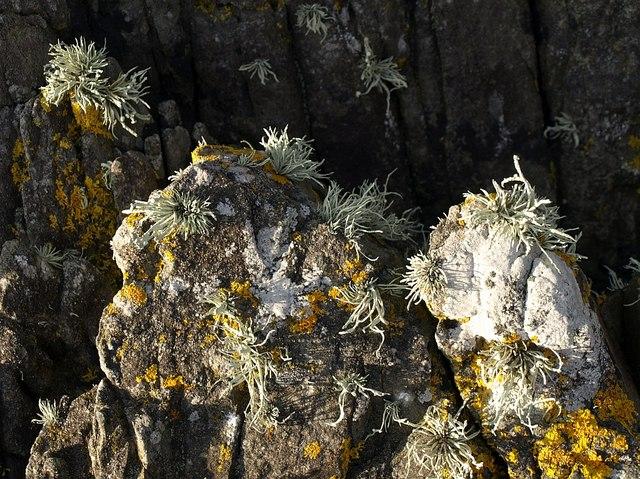 Lichens near Kelly's Cove