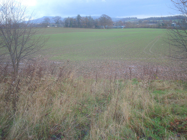 Winter wheat field south of Ludford