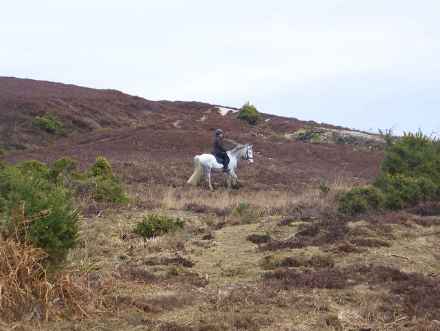 Riding on the New Forest