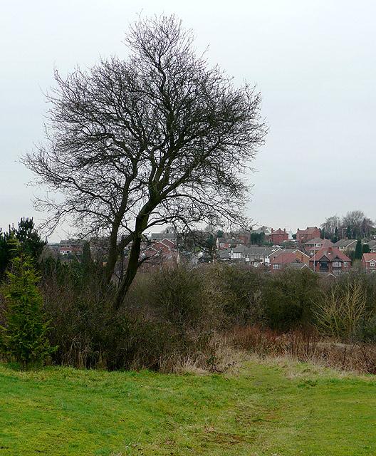 Woodland  by Gornal Wood Crematorium, Dudley