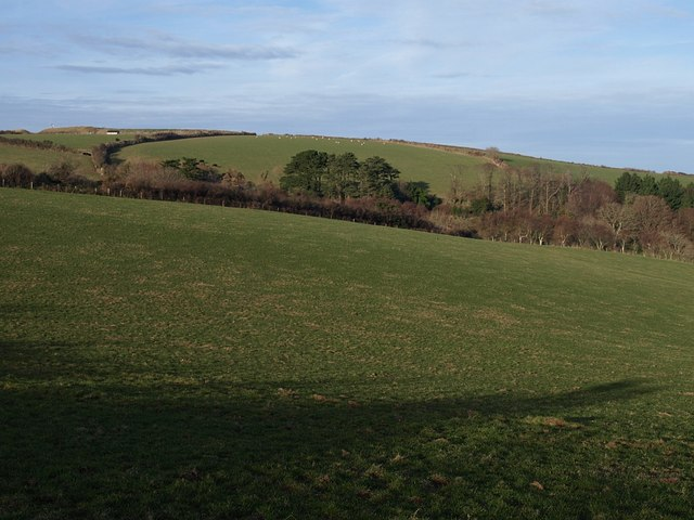Field near Coleton Fishacre