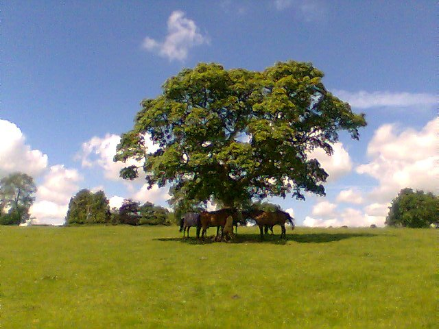 Horses and Tree on the Tissington Trail