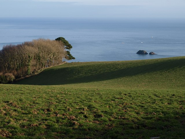 Field near Coleton Fishacre