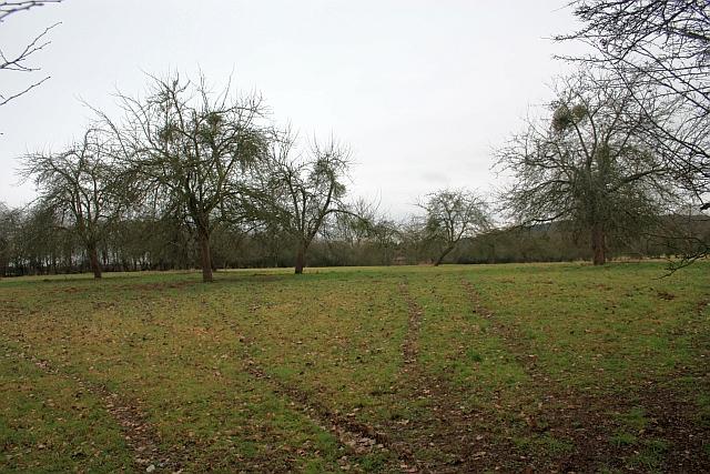 Orchard near Swinmore Farm