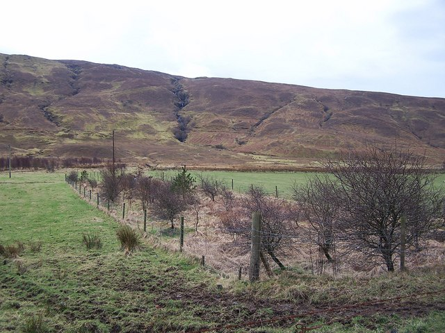 Plantation in Glen Drynoch