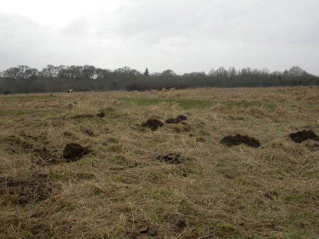 Millhams Mead, molehills