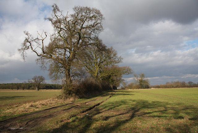 Track to Windsor Wood