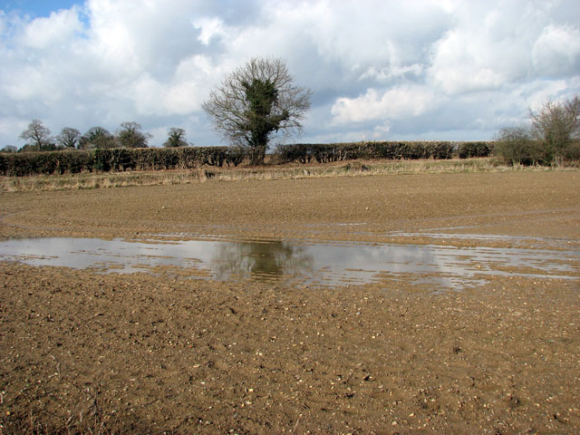 Puddle in field