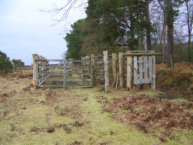 Holding Pen, New Forest