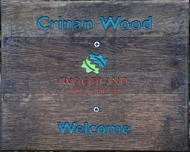 Welcome to Crinan Wood