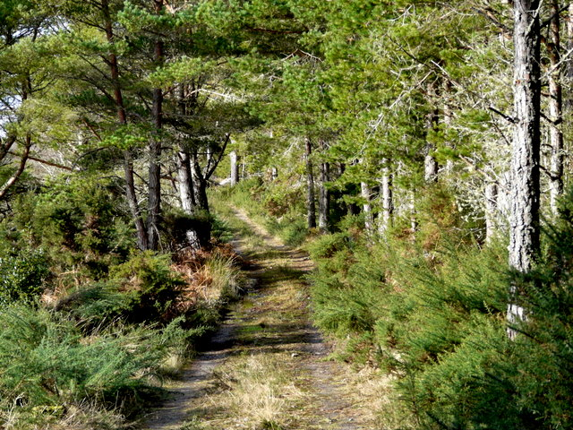 Track to Loch as Airde