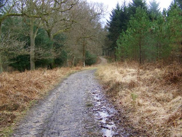 Track, Amberwood Inclosure